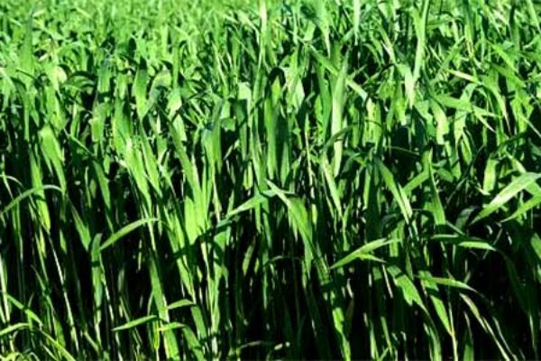 Welch On Wheat: We're In A Price-Discovery Phase