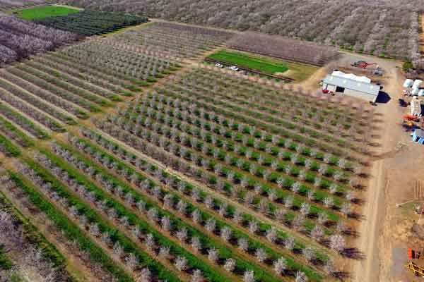 California Nuts: Annual Nickels Field Day Set For May 10, Arbuckle