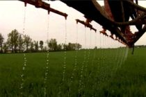 Ohio Wheat: Time for Spring Nitrogen Applications