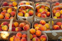 Texas Peaches: New Varieties Offer Higher Yields, Expanded Acreage