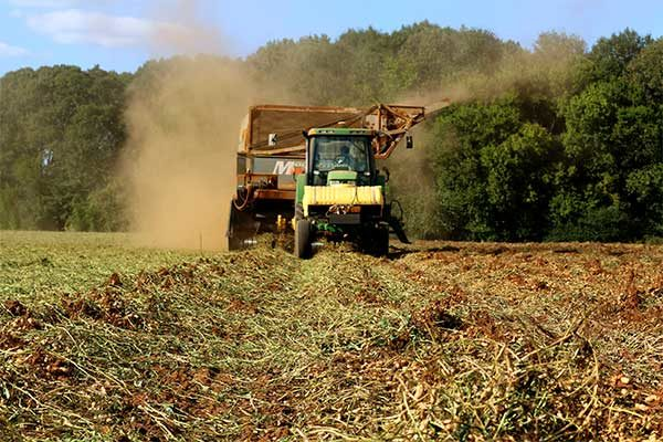 South Carolina Field Reports: Drier Conditions Speed Harvest Towards Close