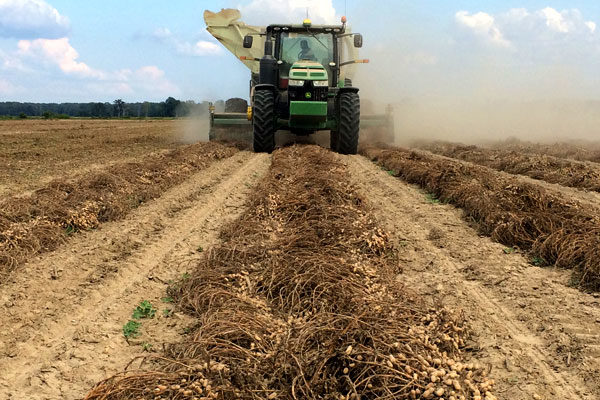South Carolina Field Reports: Mostly Good Week for Harvest