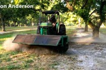Oklahoma Pecans: Harvest Active, Buyers Extremely Cautious