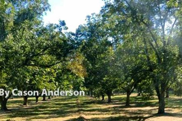 Mississippi: Pecan Field Day, Raymond, May 11