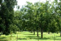 Oklahoma: Pecan Fall Field Day, Sapulpa, Sept. 22