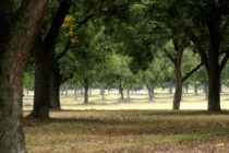 Florida: Pecan Field Day, Monticello, Nov. 16