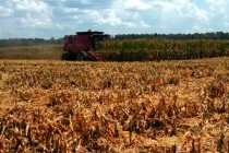 Tennessee Field Reports: Crop Yields Promising; Corn Harvest Wrapping Up