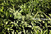 Dicamba: 4 Formulation Choices to Fight Herbicide-Resistant Weeds