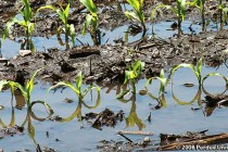 Ohio: Crops Under Water – What Can You Expect?