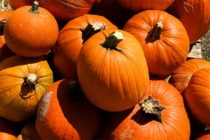 Texas Field Reports: Pumpkin Crop Looks Good, but Delayed by Rains