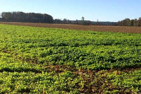 Pennsylvania: Cover Crop Planting Season Has Arrived