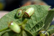Florida: Insects Stirring In Panhandle Crops