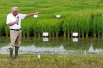 Arkansas' Rice Breeding Webinar Video Now Available