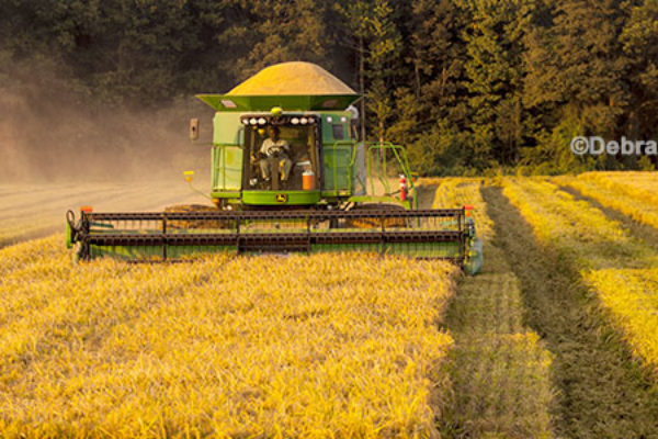 Arkansas: Bracketed by Distant Hurricanes, Growers Push on Through Harvest