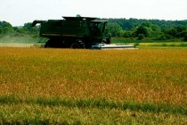 Mississippi Crop Insurance: 6 Questions for your Agent — 7 if You Grow Rice.