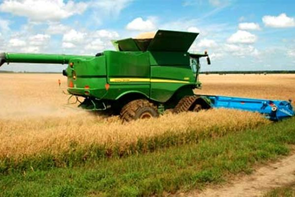 Louisiana Rice: Harvest Decisions And A Potential Storm