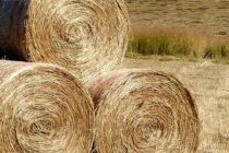 Indiana: Hay Producers Should Test Nutritional Value Due to Wet Weather