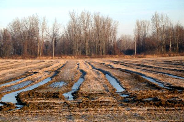 Michigan Soybeans: Recommendations for a Late Harvest