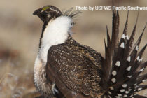 Sportsmen and Conservationists Side Against Trump Decision on Sage Grouse – DTN