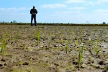 Arkansas Rice: Combining Seed Treatments; Enterprise Budgets