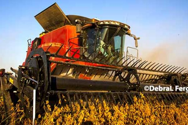 Mississippi Field Reports: Early Soybean Harvest Begins