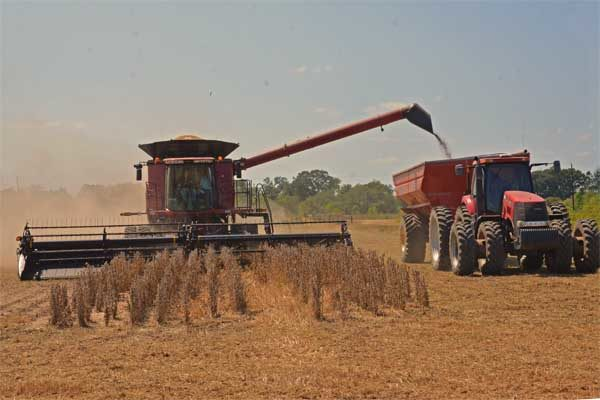 Louisiana Field Reports: Soybean Harvest Nearly Finished, Conditions Dry