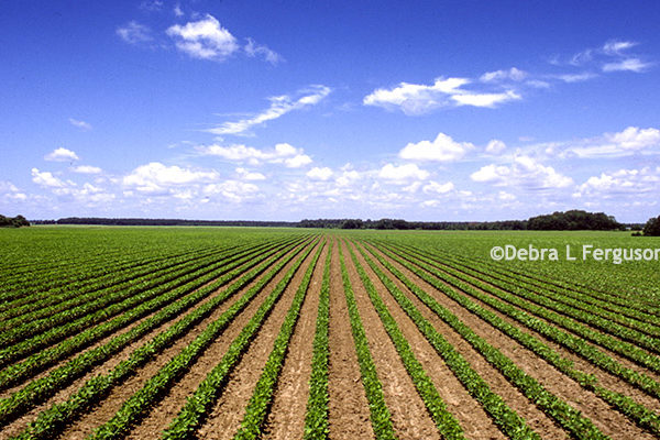 Soybeans: Dow and ADM Collaborate on Introduction of Enlist E3 Herbicide Technology – DTN