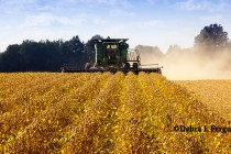 Good on Grain: Major Focus on Corn, Soybean Yields, But Acreage Questions Surface