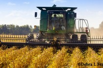 "Oops! EPA ""Inadvertently"" Releases Report Clearing Glyphosate As Human Carcinogen"