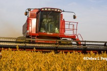 Soybeans: Minor Combine Adjustments, Major Yield Gains