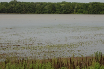 Illinois: State and Surrounding Areas Qualify for Ag Assistance Due to Flooding