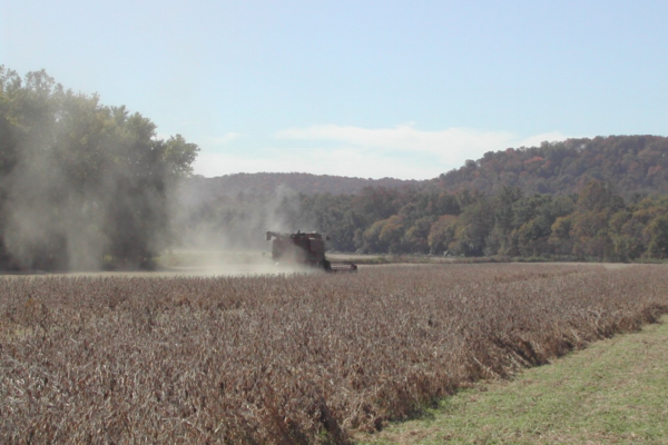 Kentucky Corn, Soybeans: Recommendations for Late Season Harvest