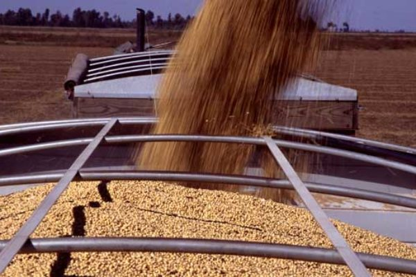 Global Markets: Oilseeds – China Key to Slow Pace of U.S. Soybean Exports