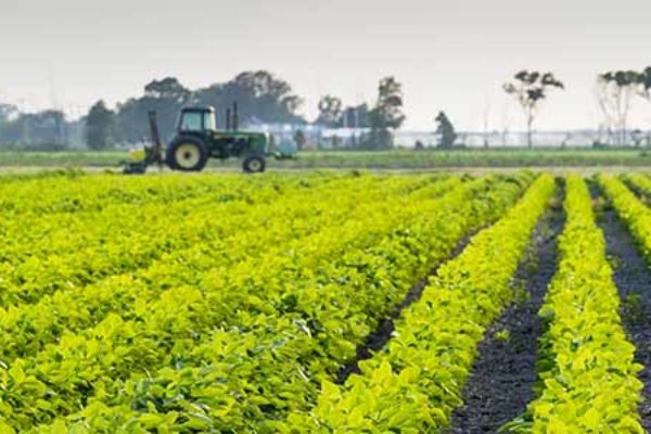 Dicamba Tank Mixes: Farmers, Applicators Wait for More EPA Approved Products – DTN