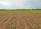 Nebraska Corn, Soybeans: When Weather and Weeds Beat Pre-Emergence Herbicides
