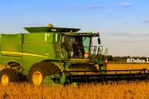 WASDE Oilseeds: U.S. Soybean Exports Expected to Slow for 2nd Half of 2016-17