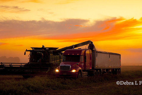 Strong Soybean Yields In Midwest – What's Making A Difference? – DTN