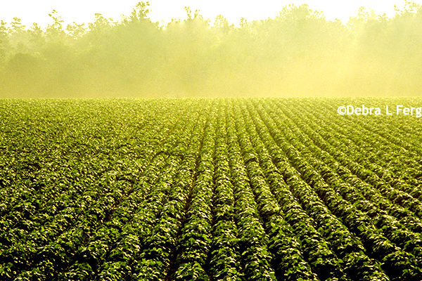 Iowa Farmers: Less Tillage Reduces Nitrates and Phosphorus in Watershed – DTN