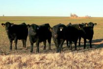 DTN Livestock Open: Futures Set for Moderate Gains