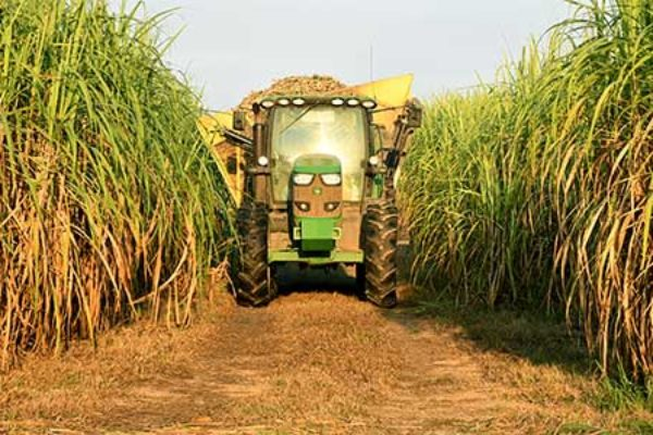 Louisiana: Sugarcane Harvest Doing Well at Halfway Point