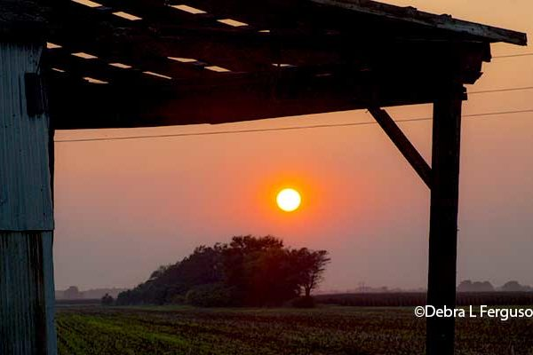 Illinois Farm Business: Habits of Financially Resilient Farms