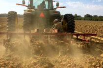 Louisiana: Sweet Potato Producers See Weather-Related Losses