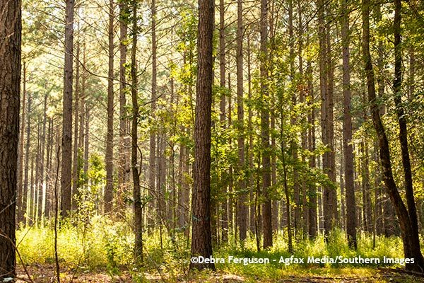 South Carolina Forest Landowners Learn About Carbon Market