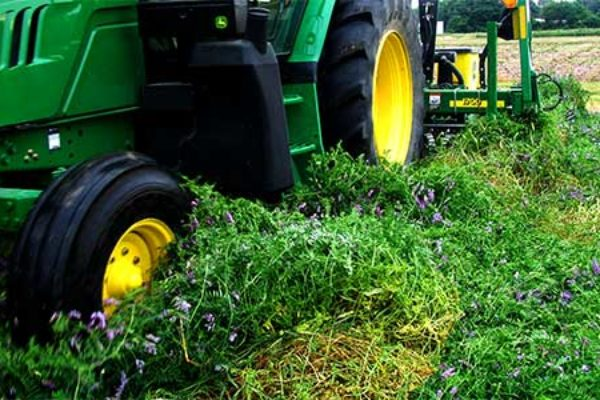 Illinois: 5 Considerations for Cover Crop Termination