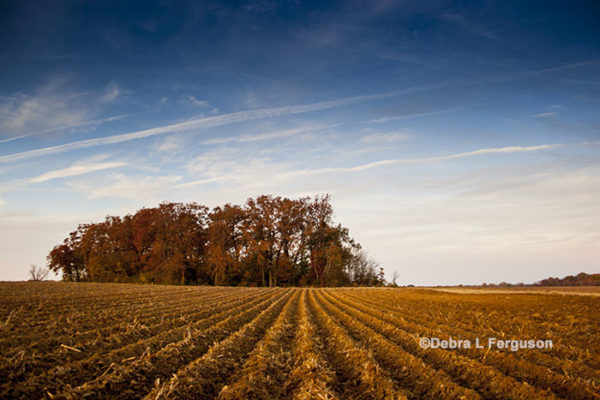Grain TV: Does Spring Weather Favor Less Corn Acres?