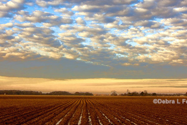 Cleveland on Cotton: Strong Export Sales Continue; Moisture is Plentiful