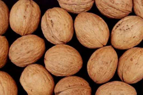 California Walnuts: Atwater Field Day Set For May 31