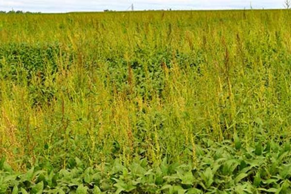Iowa: Herbicide Resistance Management Session, Commodity Classic, San Antonio, March 4