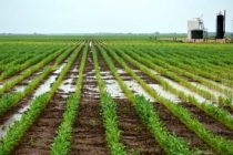 Texas Field Reports: Moisture Levels, Water Availability Looking Mostly Good