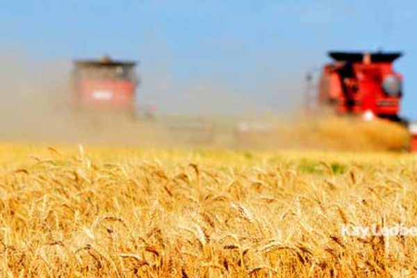 Welch On Wheat: Exports Take A Nice Jump